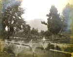 Shalimar Bagh (Date: Unknown)